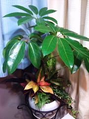 新しい 植物たち