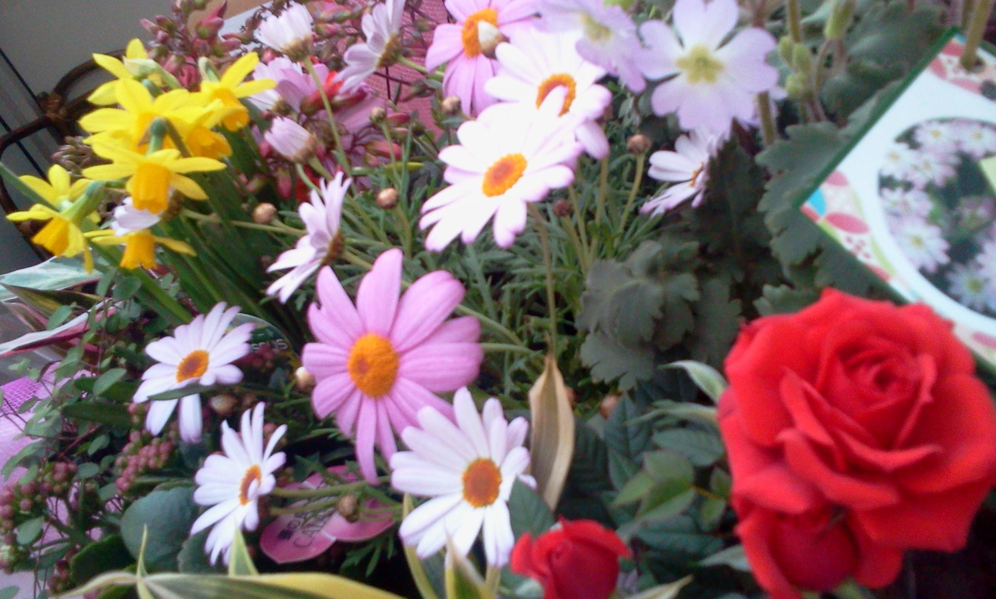 御礼   と 春よ こい