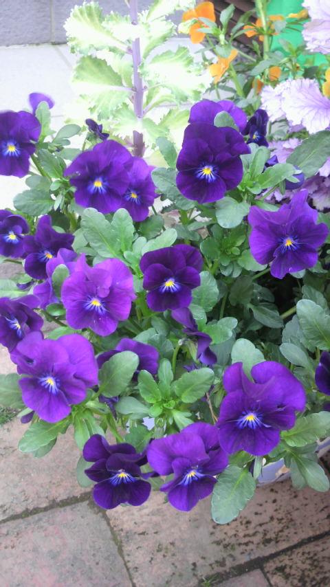 お庭が花盛り