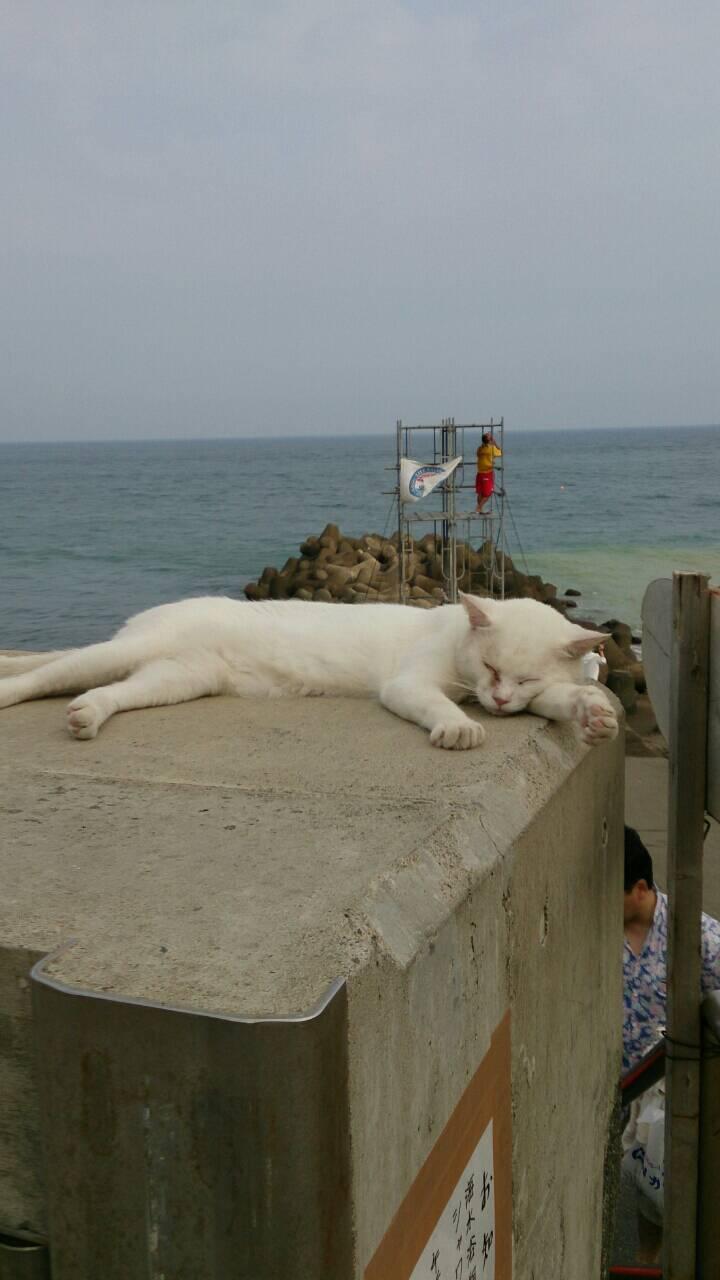 リゾートの猫たち