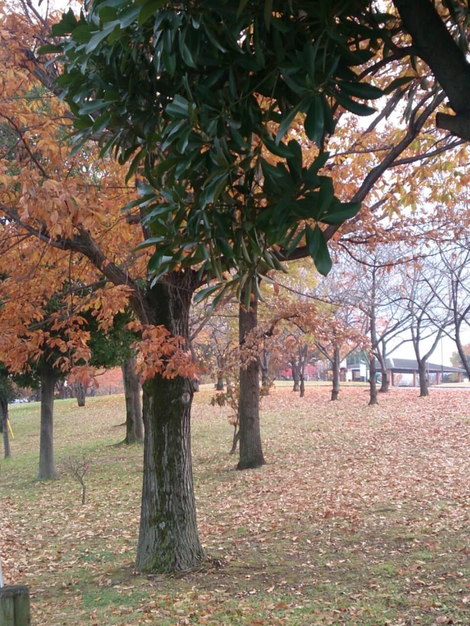 加須はなさき水上公園の紅葉