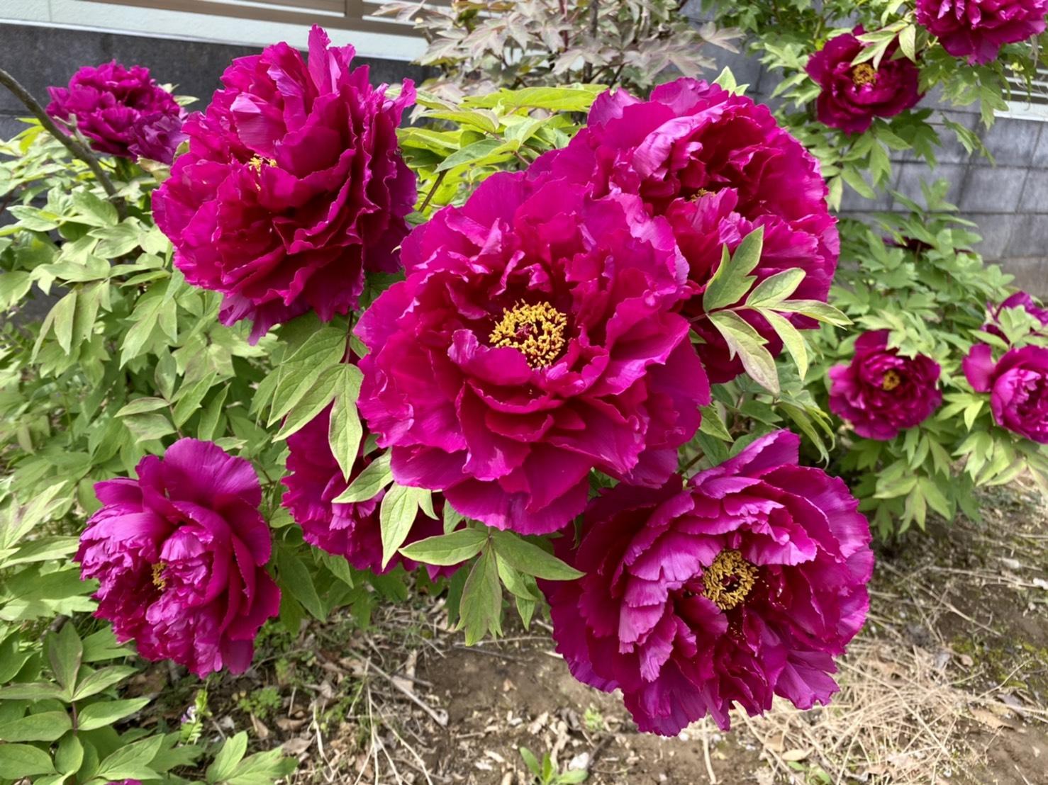 お花が楽しい季節